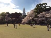 新宿御苑 桜.jpg