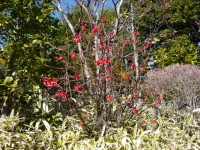 目白庭園.jpg
